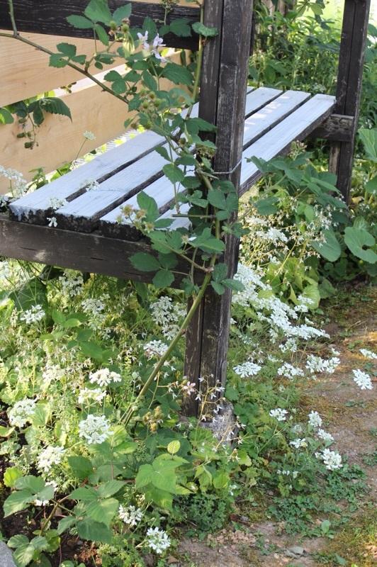 今朝の庭_b0132338_07503253.jpg
