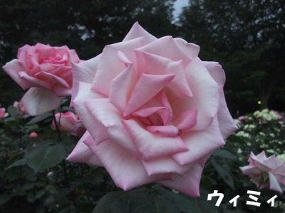b0165139_2234860.jpg