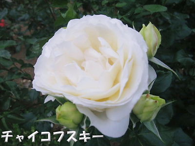 b0165139_2236372.jpg