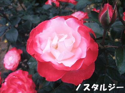 b0165139_2237257.jpg