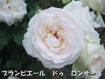 b0165139_2238452.jpg