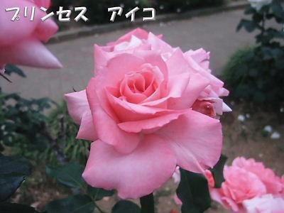 b0165139_22385648.jpg