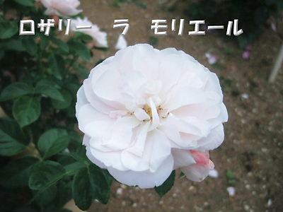 b0165139_2240222.jpg
