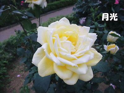 b0165139_22403441.jpg