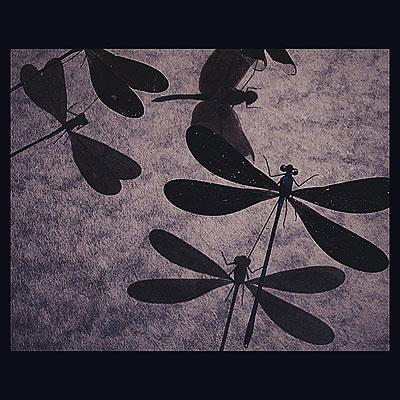 NEW ARRIVAL 「トンボの標本」_f0247848_19411588.jpg
