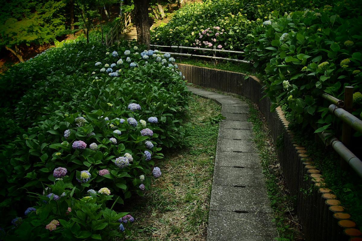 山田池公園                       _f0021869_2285530.jpg