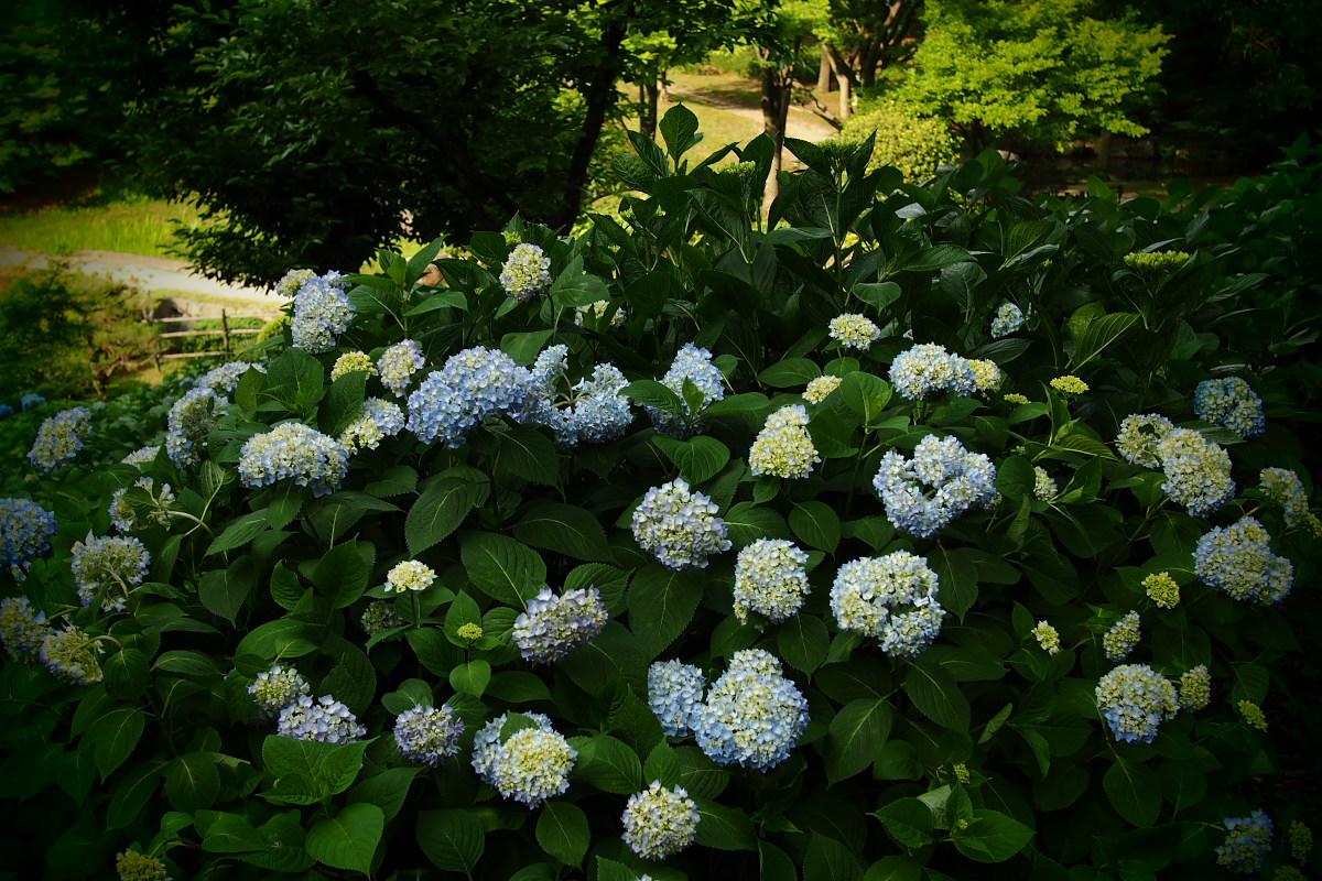 山田池公園                       _f0021869_229429.jpg