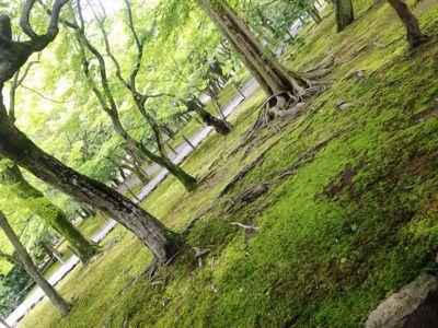 美山荘 日本のもてなし_e0326573_14123968.jpg