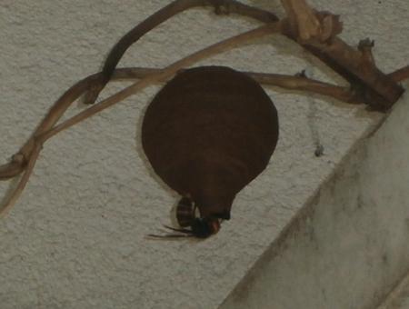 スズメバチの巣を撤去_f0018078_19122529.jpg
