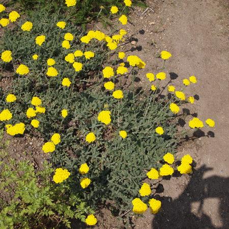 お庭の様子_a0292194_19231375.jpg