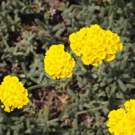お庭の様子_a0292194_1923343.jpg