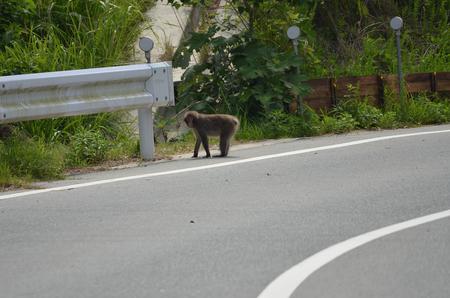 サルが出た!_a0026295_16293724.jpg