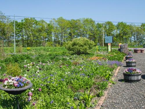 「大森カントリーガーデン」へ・・宿根草の苗を買いに行きました!_f0276498_00041301.jpg