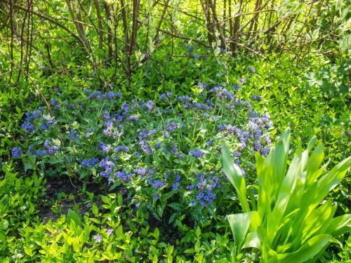 「大森カントリーガーデン」へ・・宿根草の苗を買いに行きました!_f0276498_00051186.jpg