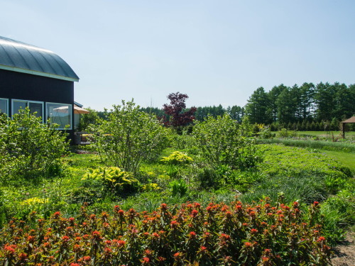 「大森カントリーガーデン」へ・・宿根草の苗を買いに行きました!_f0276498_00054218.jpg