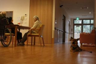 老人ホームで暮らす伴侶動物_f0242002_1525487.jpg