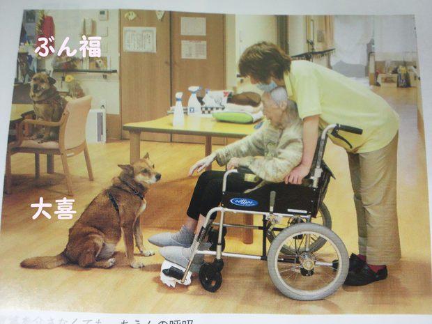 老人ホームで暮らす伴侶動物_f0242002_16166.jpg