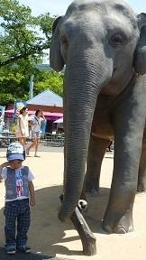 東山動物園_a0177314_22443112.jpg