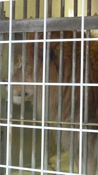 東山動物園_a0177314_22444118.jpg