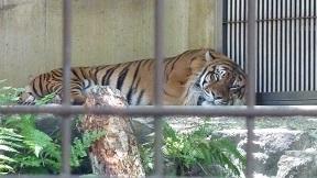 東山動物園_a0177314_22445096.jpg