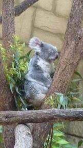 東山動物園_a0177314_22451071.jpg