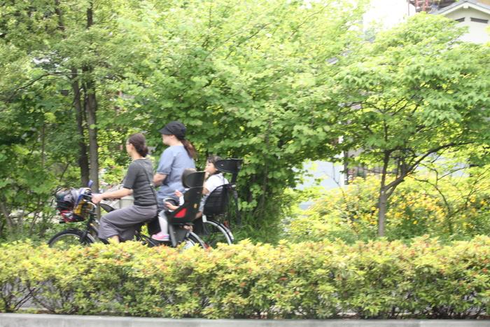 足立区/葛西用水桜通りの今。。_a0214329_7171747.jpg