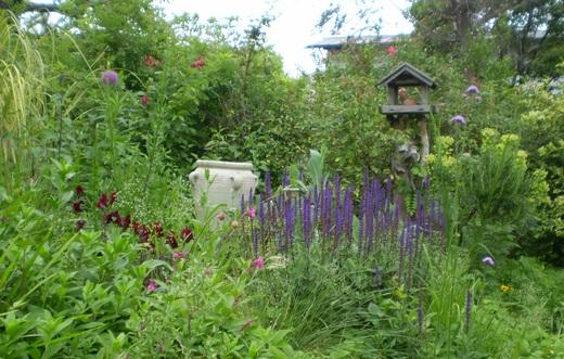 宿根草でお庭をすてきにしましょう!_f0139333_23595188.jpg
