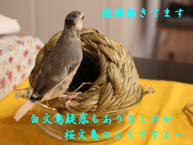 c0365734_20093184.jpg
