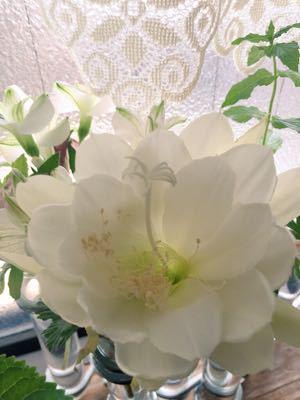 切り花で咲く月下美人⁉︎_e0086864_22475414.jpg