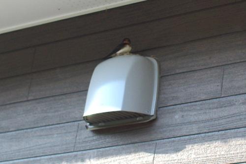 ツバメの巣作りを見守ることにした。_c0110869_456760.jpg