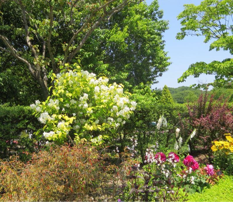花フェスタ記念公園3_e0233674_12101520.jpg