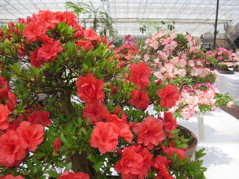 花フェスタ記念公園3_e0233674_12101629.jpg