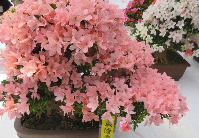 花フェスタ記念公園3_e0233674_12101755.jpg
