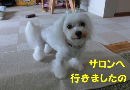 b0193480_15233567.jpg