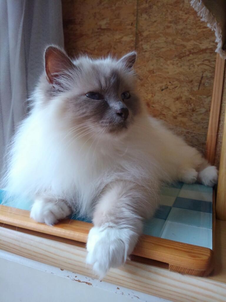 猫ベッドは要らない_a0045697_16104912.jpg