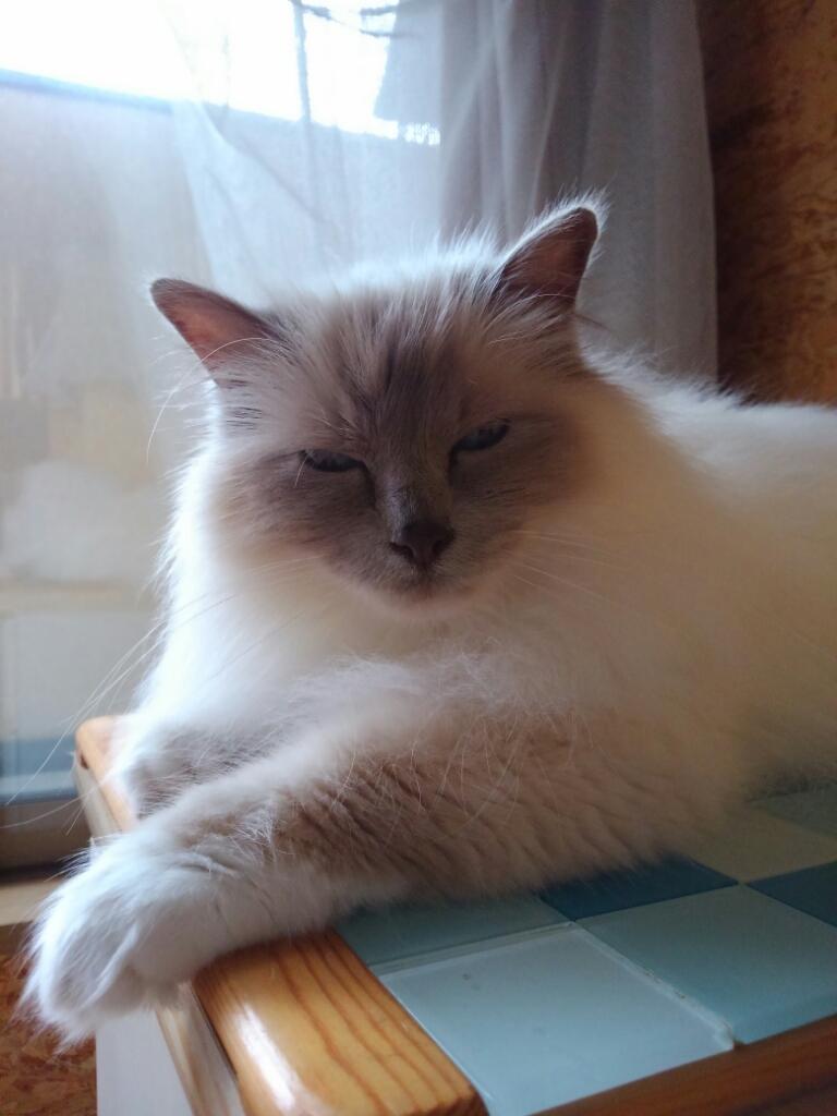 猫ベッドは要らない_a0045697_16105303.jpg