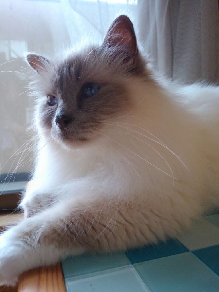 猫ベッドは要らない_a0045697_16105730.jpg