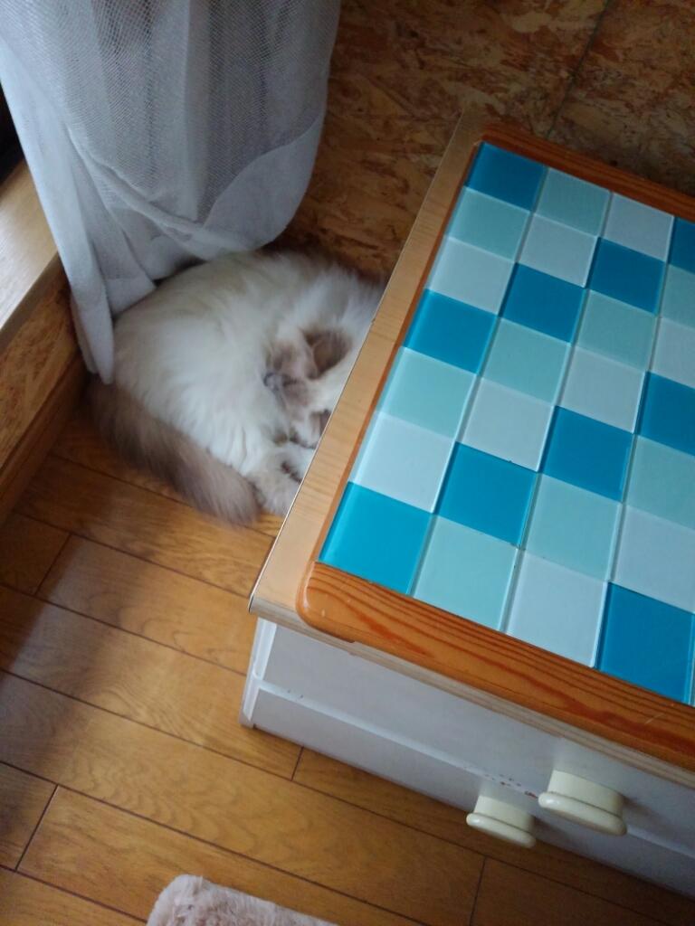 猫ベッドは要らない_a0045697_16110470.jpg
