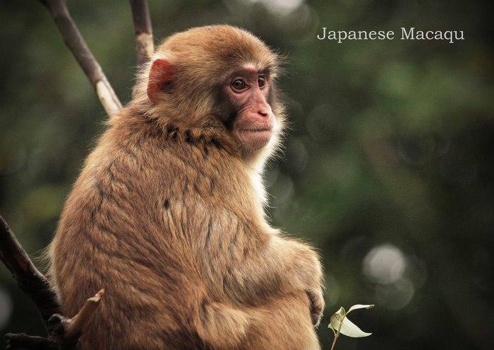 ニホンザル:Japanese Macaqu_b0249597_675465.jpg