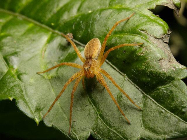 公園でクモの写真を撮りました_b0025008_901616.jpg