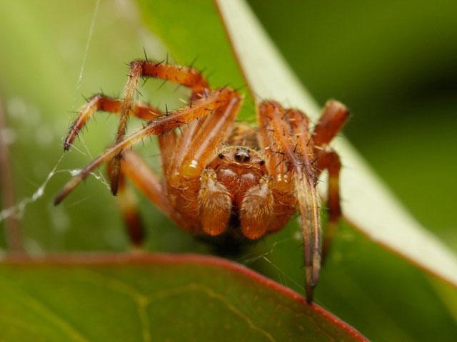 公園でクモの写真を撮りました_b0025008_90716.jpg