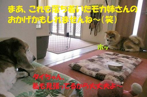 f0121712_20165060.jpg