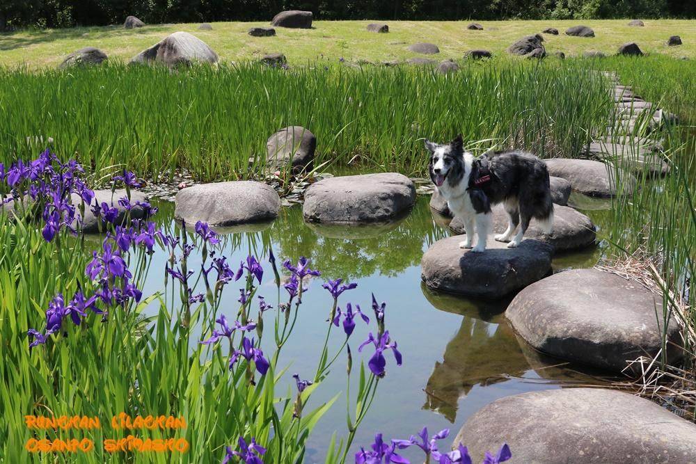 飛び石ポイントの春~♪_b0192121_18272263.jpg