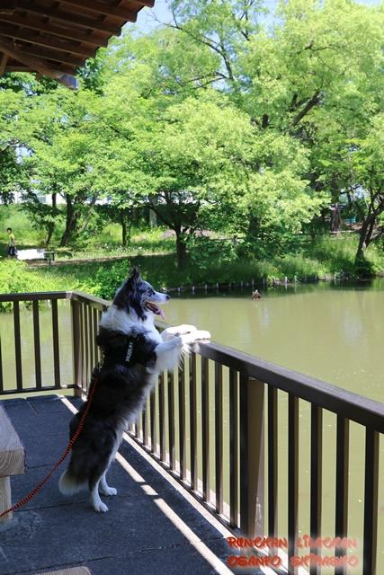 公園めぐり~♪_b0192121_18474094.jpg