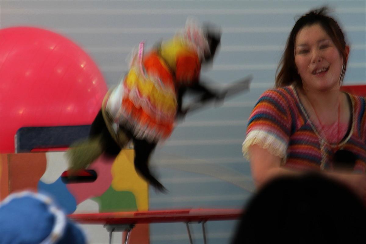 福島市桜木町 福島競馬場内 福島県観光キャンペーン 「福が満開、福のしまフェスタ2015」_d0106628_07122780.jpg
