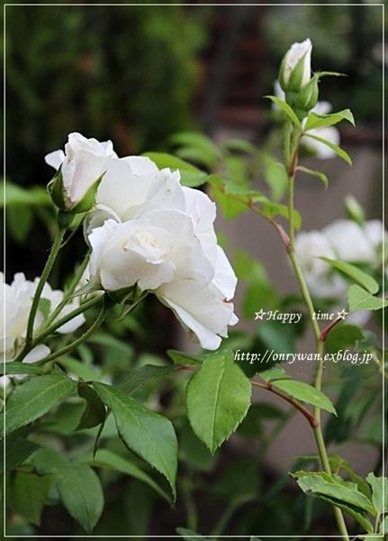 f0348032_19253996.jpg