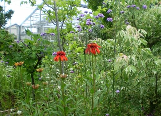 宿根草でお庭をすてきにしましょう!_f0139333_03981.jpg