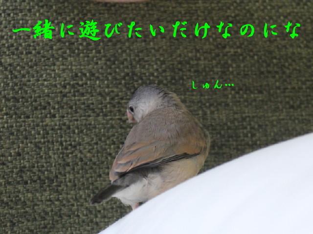 c0365734_19562747.jpg
