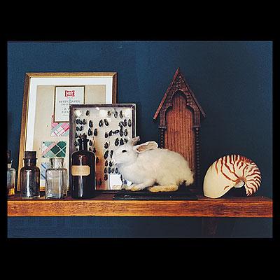 NEW ARRINVAL 「ウサギの剥製」_f0247848_14593197.jpg