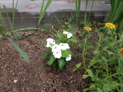 久しぶりにお花を植えました♪_b0115751_00140505.jpg